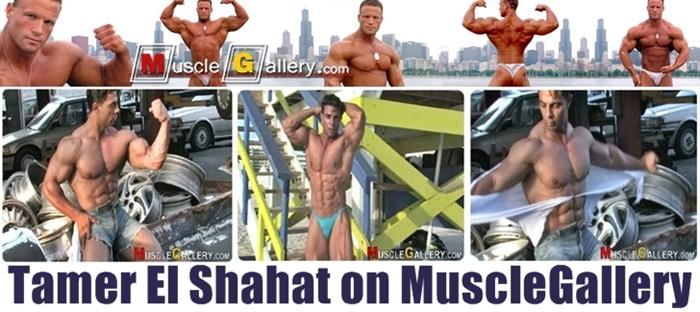 Tamer El Shahat - MuscleGallery